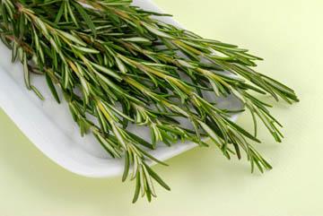Розмарин — вполне эффективная трава от моли, но быстро теряющая свой запах