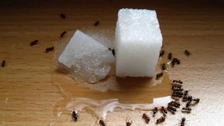 Остатки пищи на посуде, в ведре для мусора, мельчайшие крошки на полу – все это для муравьев будет наипервейшим лакомством
