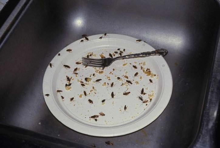 Нельзя оставлять на столе или в раковине грязную посуду или не выносить вовремя мусорное ведро