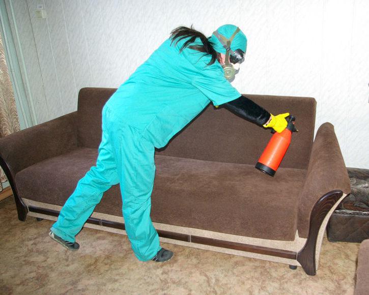 Обработка дивана от блох