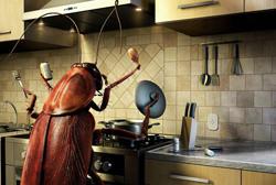 Остатки продуктов на кухне - основная причина появления тараканов и их размножения