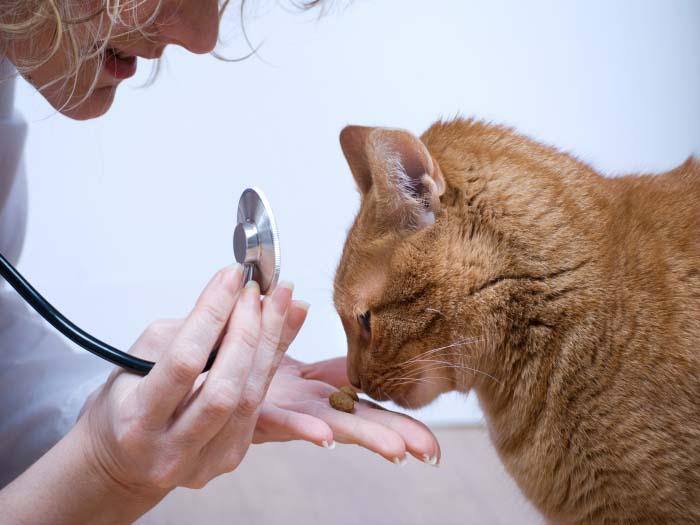 Беременных кошек или маленьких котят обрабатывают средствами от блох только после консультации с ветеринаром