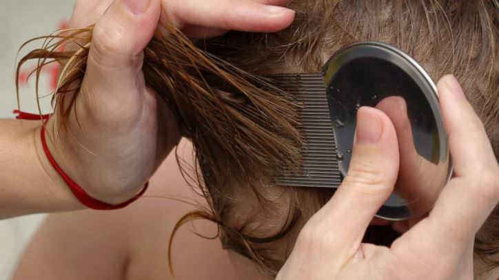Механические методы воздействия помогают избавиться не только от вшей и гнид, но и от нимф