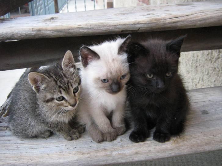 У котенка вполне возможно появление глистов, особенно если он был взят с улицы