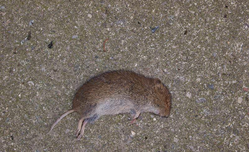 В зависимости от основных действующих элементов яды для мышей бывают органическими и неорганическими