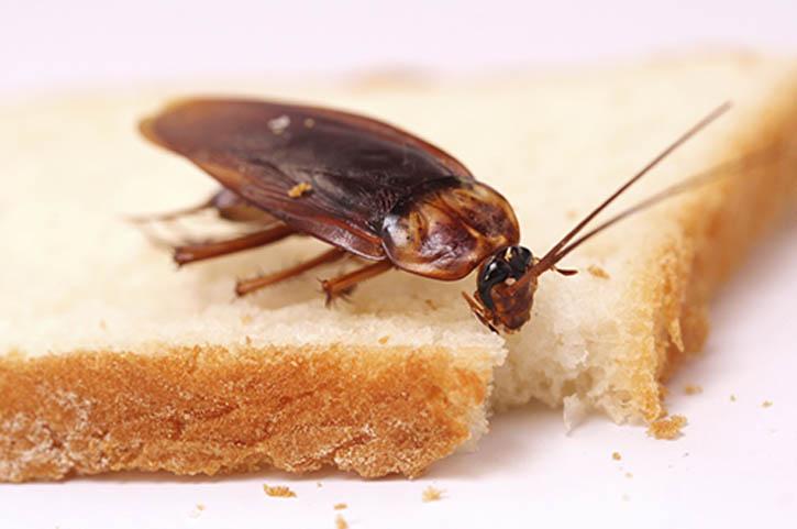 Таркан поедает хлеб