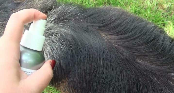 Готовый «Неостомозан» можно использовать для уничтожения вредных насекомых на домашних и сельскохозяйственных животных