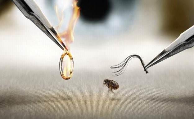 Войну с любым из видов насекомых практически все энтомологи рекомендуют начать именно с тщательной подготовки территории. В этом случае речь пойдет о генеральной уборке полностью всего дома