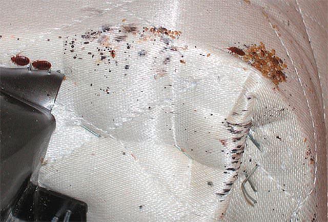 Если на постели имеются очень маленькие коричневые пятна, это тоже говорит о наличии постельных блох