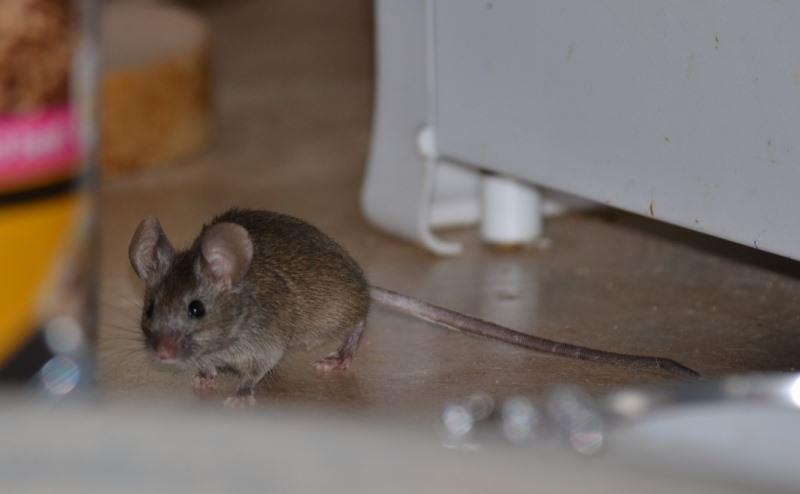 Отсутствие еды и воды сделает жилье непривлекательным для зверьков, принудит их искать другое место обитания