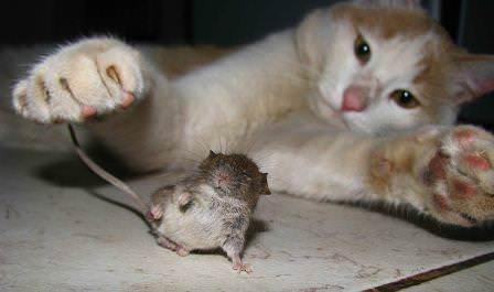 Борьба с мышами в частном доме - это одна из самых серьезных и важных проблем