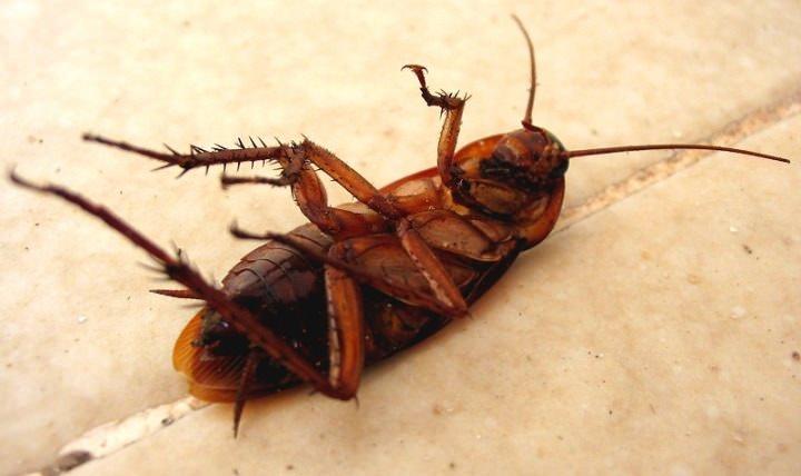 «Гетт» проникает в организм насекомого через покровы тела, пищеварительный тракт или органы дыхания