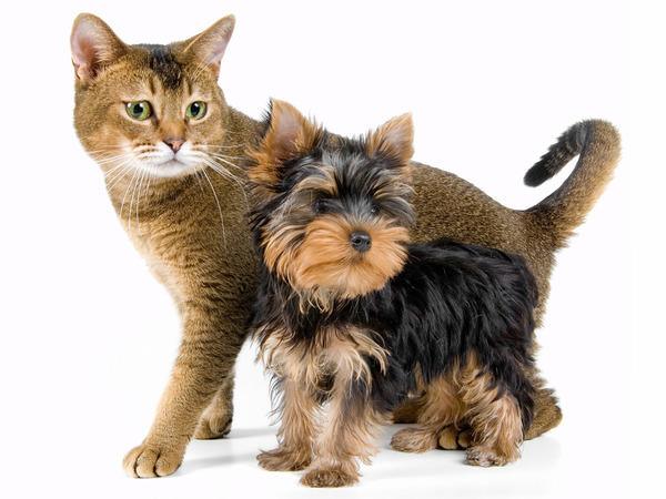 Зачастую для кошек доза препарата должна быть меньше, чем для собаки. Но не всегда...