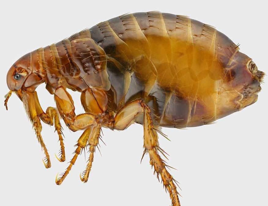 паразиты в человеке симптомы и лечение