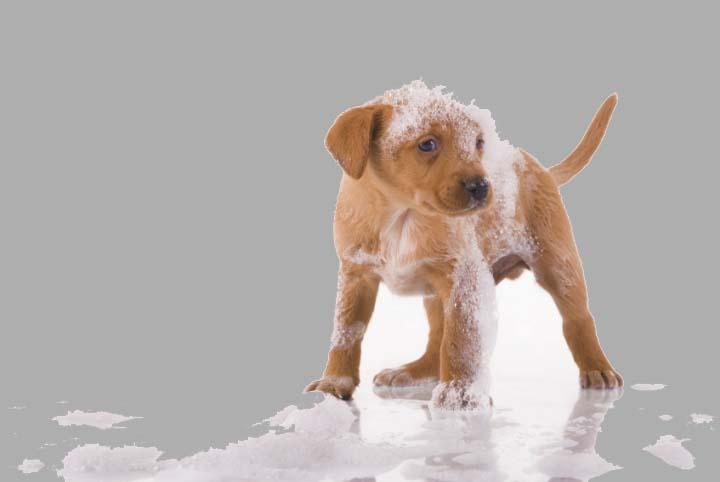 Больше всего шампуни против блох подходят для щенков