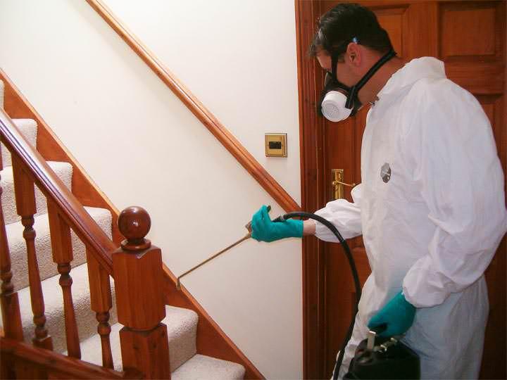 Вызов специалиста на дом – один из способов борьбы с блохами