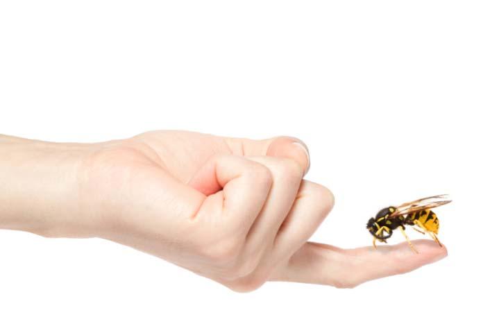 Укусы ос и пчел болезненные и наиболее часто вызывают аллергию