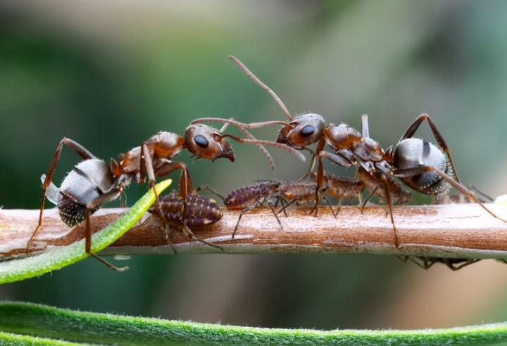 Природные враги некоторых видов клопов достаточно эффективно используются преимущественно в сельском хозяйстве
