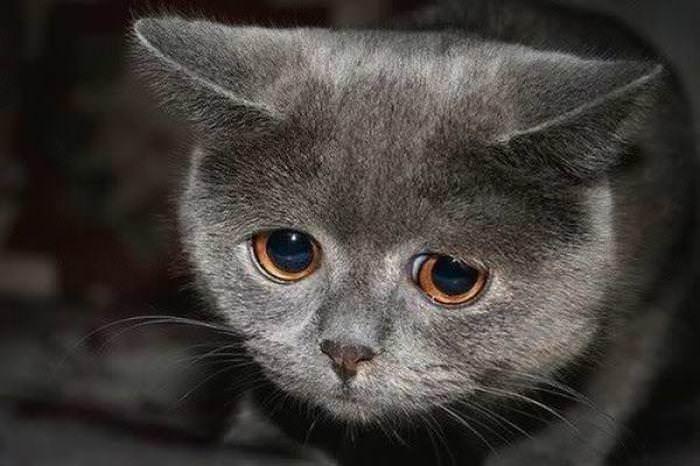 Практически у всех живых существ ультразвук может вызвать негативные ощущения, состояние страха и паники, депрессию, угнетение деятельности. Но при этом нужна определенная и достаточно высокая частота