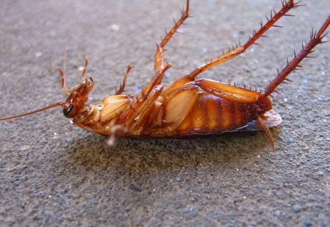 Стоит ультразвуковой отпугиватель, который действительно помогает избавиться от различных насекомых и тараканов, относительно дорого