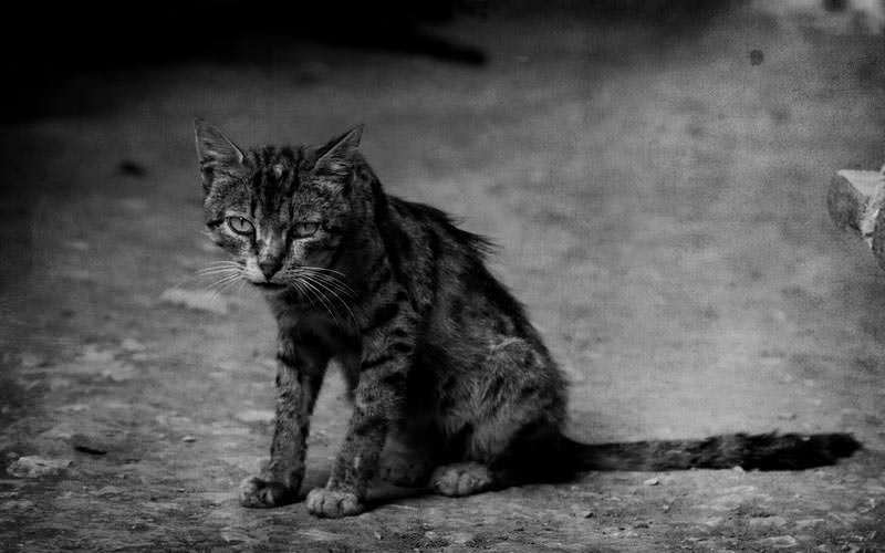 Блохи и клещи для животных крайне опасны