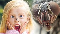 Наиболее неприятными последствиями может обернуться укус, осуществленный насекомым в глаз