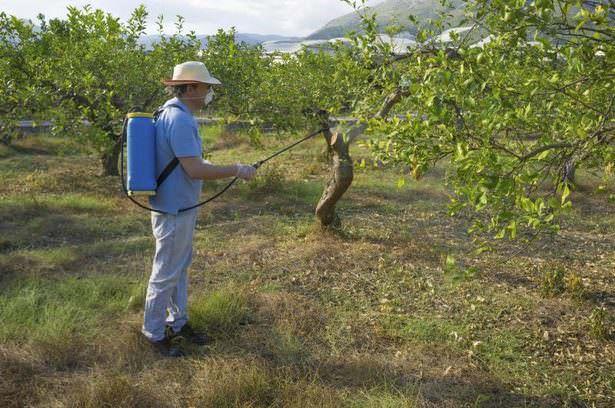 До и после цветения растений можете прибегнуть к испытанным народным методам − обработать деревья настоями табака, полыни, помидорной и картофельной ботвы