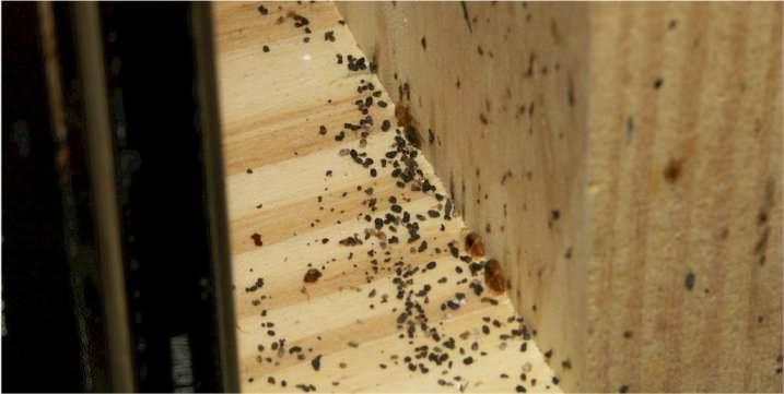 Живут паразиты не только в кровати, но и в других местах квартиры