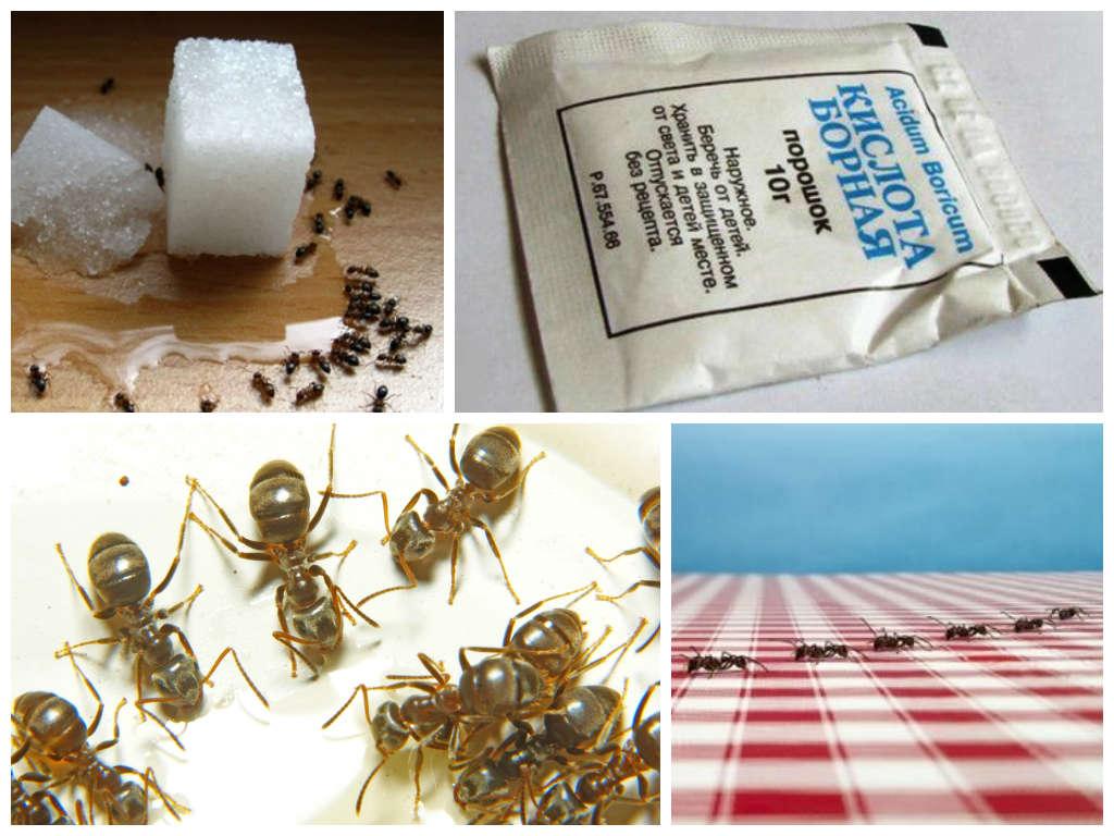 Против домашних муравьев применяют целый спектр средств