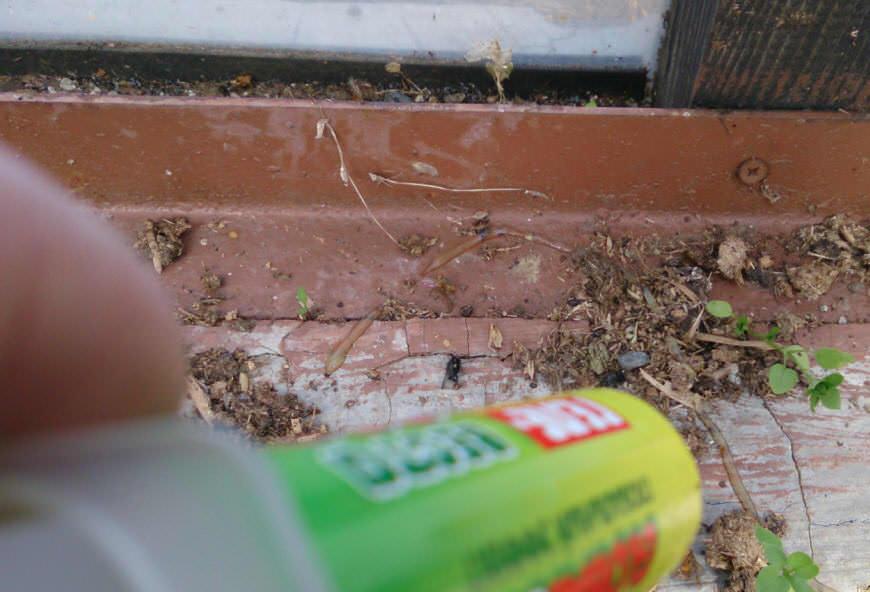 Гель наносится дорожками в местах скопления и передвижения насекомых