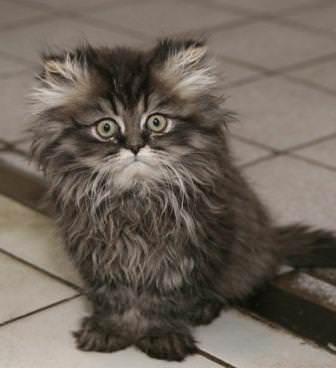 Народные средства лечения от глистов у кошек