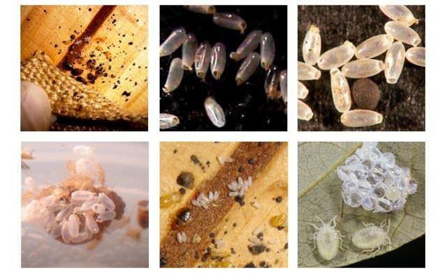 Выбирая химические средства борьбы с гнездами клопов, следует учитывать не только их эффективность, но ещё и степень токсичности, запах препарата, его экономичность