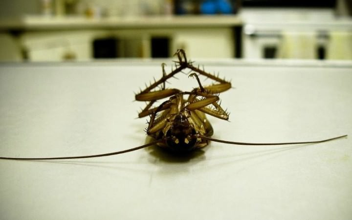 Ловушки для тараканов достаточно эффективны