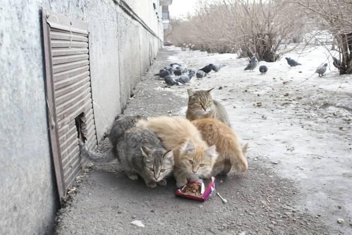 Блохи переходят из подвалов либо заносятся с домашними животными
