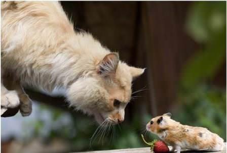 Чтобы избавиться от грызунов, нужно знать, чего боятся мыши