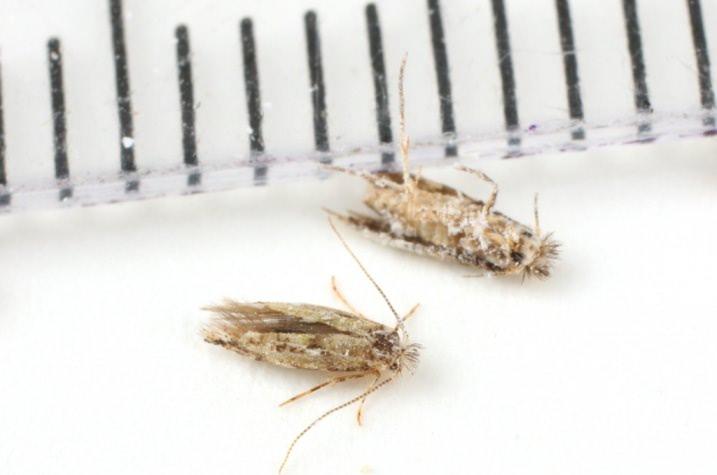 Феромонные ловушки привлекают насекомых и механически удерживают их