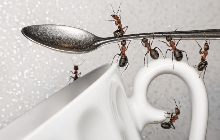 В квартире не должно быть легкодоступной воды, чтобы муравьи не напились