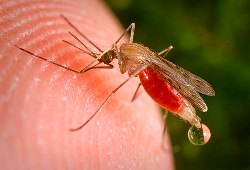 Средство от комаров в квартире