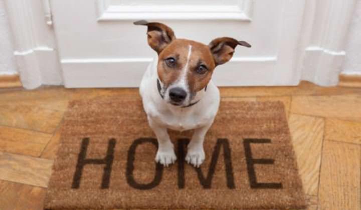 Наличие в доме животных увеличивает вероятность появления эктопаразитов