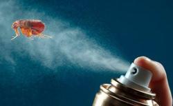 Спрей – лидирующий препарат в борьбе с блохами