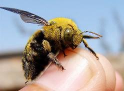 Спастись от насекомых в летний период редко удается даже в квартире