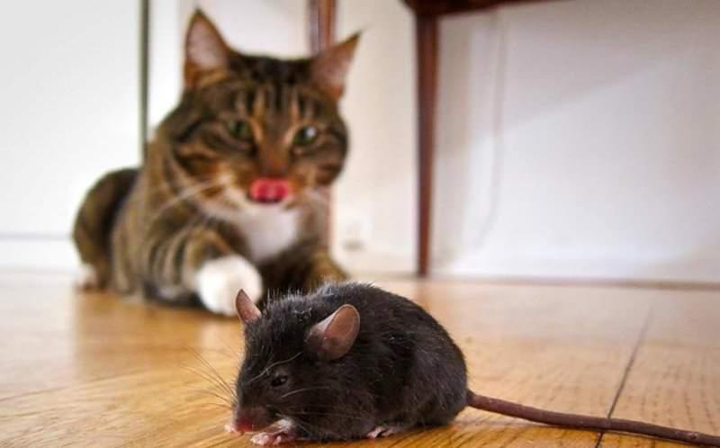 На сегодняшний день способов побороть крысиное нашествие более чем предостаточно