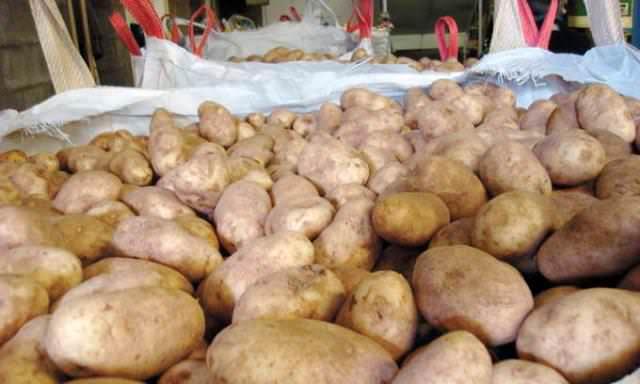 Хранить урожай лучше в прохладном помещении, с максимальной температурой +5 градусов. В таких условиях моль погибает