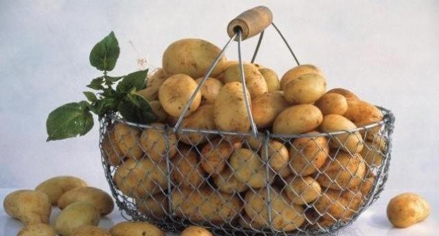 Проблемой получения урожая с собственной грядки, из которого будет так приятно приготовить вкусные блюда, могут стать только вредители – колорадский жук и картофельная моль
