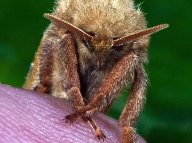 Экологи пока не могут предсказать, чем обернётся скопление насекомых-паразитов, поэтому последний метод применяют с осторожностью