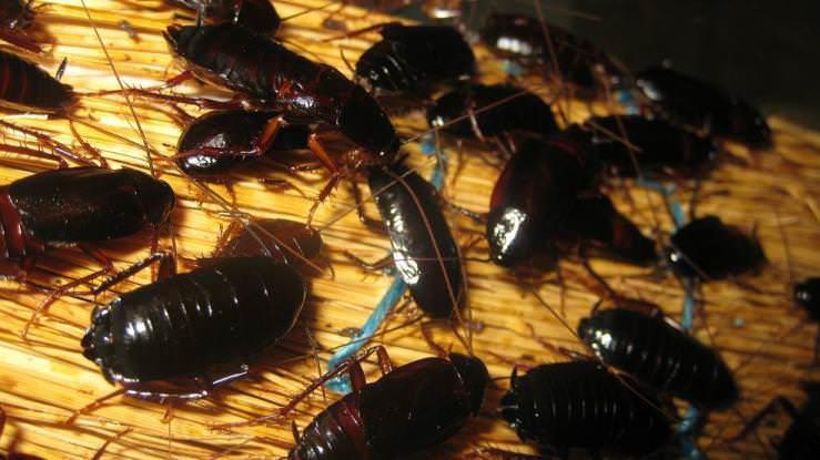 топ 10 паразитов живущих в человеке