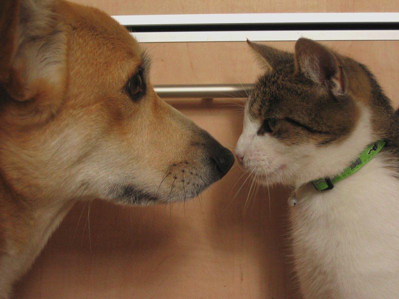 Кошка или собака не отравятся, если им по ошибке доведется проглотить порошок в малых количества
