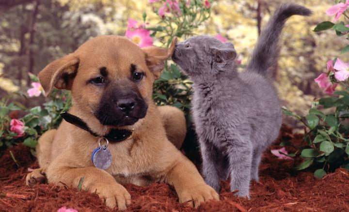 Народными средствами против блох можно обрабатывать котят, щенков и беременных животных