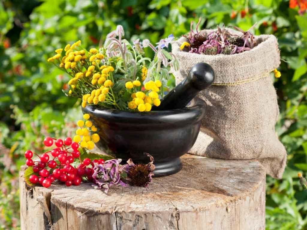 Инсектицидные свойства трав не так сильны, поэтому такая дезинфекция малоэффективна