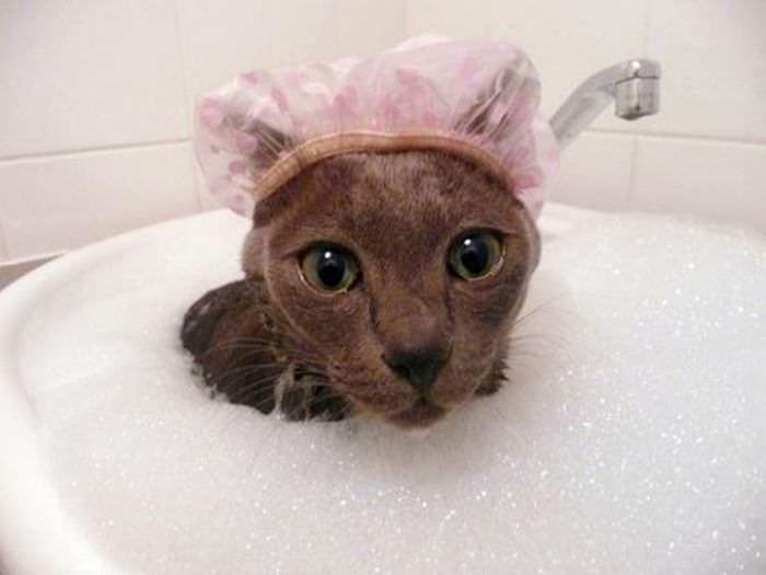 Кошек в профилактических целях надо мыть регулярно